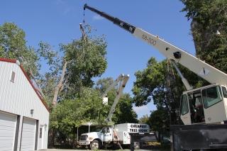 Professional Tree Service In Wichita Ks Cheapest Tree